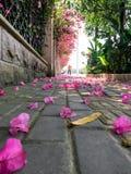 Flores caídas na rua imagens de stock royalty free