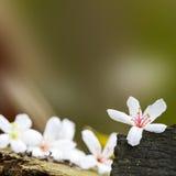 Flores caidas de tung imagen de archivo libre de regalías