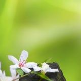Flores caidas de tung foto de archivo libre de regalías