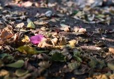 Flores caidas el otoño del piso Foto de archivo
