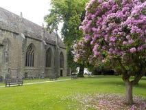 Flores caidas en la yarda del catedral fotografía de archivo