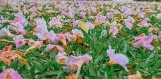 Flores caidas rosa en hierba verde Fotografía de archivo