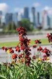 Flores carmesins Fotografia de Stock Royalty Free