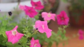 Flores caseiros molhando filme