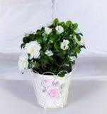 Flores caseras Imagen de archivo libre de regalías