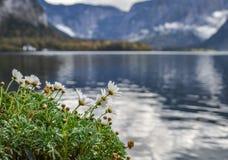 Flores cerca del lago imagen de archivo libre de regalías