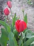 flores cerradas del rad fotografía de archivo