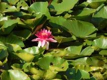 Flores checas alrededor del río Imagen de archivo