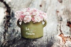 Flores chiques gastos Imagem de Stock Royalty Free