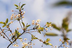 Flores, cierre para arriba Foto de archivo libre de regalías