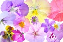 Flores clasificadas de la cabaña Fotos de archivo libres de regalías