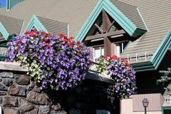 Flores colgantes del centro turístico Fotos de archivo