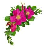 Flores color de rosa salvajes y arreglo verde de las ramitas Fotos de archivo