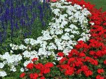 Flores coloreadas Fotos de archivo libres de regalías