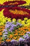 Flores coloreadas Imagen de archivo