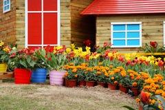 Flores coloreadas alrededor de las cabañas Imagen de archivo libre de regalías