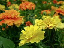 Flores coloreadas del jardín con la falta de definición de las lentes fotografía de archivo libre de regalías