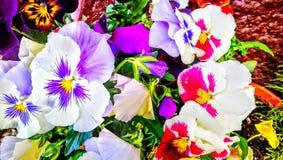 Flores coloreadas multi Fotografía de archivo