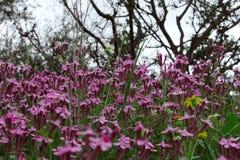 Flores coloreadas salvajes Fotografía de archivo libre de regalías