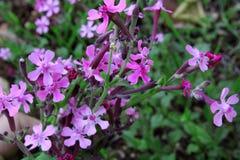 Flores coloreadas salvajes Fotografía de archivo