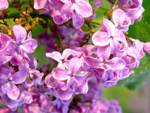 Flores coloridas fotografía de archivo