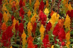 Flores coloridas 1 fotos de stock