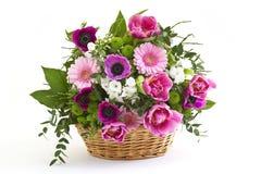 Flores coloridas Fotografia de Stock