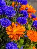 Flores coloridas Imagem de Stock