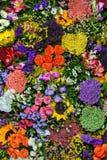 Flores coloridas 2 imágenes de archivo libres de regalías