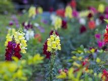 Flores coloridas Imagenes de archivo