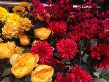 Flores coloridas Fotos de archivo libres de regalías