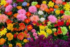 Flores coloridas #1 Imagem de Stock Royalty Free