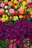 Flores coloridas #3 Fotografia de Stock Royalty Free