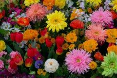 Flores coloridas #4 Fotografia de Stock Royalty Free
