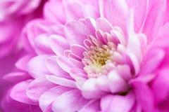 Flores coloridas Foto de Stock Royalty Free