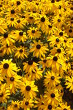 Flores coloridas 8 Fotos de archivo libres de regalías