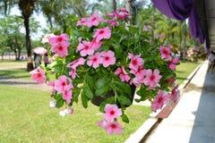Flores coloridas Fotografía de archivo libre de regalías