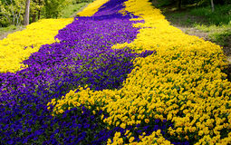 Flores coloridas Imagen de archivo