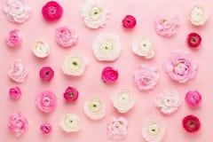 Flores coloridas bonitas do ranúnculo em um fundo branco Cartão do dia dos Valentim imagem de stock royalty free
