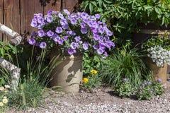 Flores coloridas bonitas no jardim Fotos de Stock Royalty Free