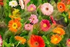 Flores coloridas brilhantes suculentas em uma janela da loja Imagem de Stock