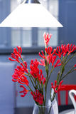 Flores coloridas brilhantes suculentas em uma janela da loja Fotografia de Stock
