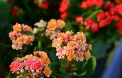 Flores coloridas brillantes Fotos de archivo libres de regalías