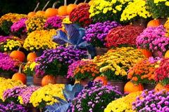Flores coloridas com abóboras Fotos de Stock Royalty Free