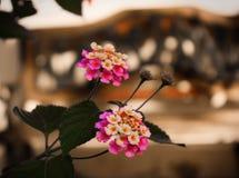 Flores coloridas con el fondo 2 Fotografía de archivo libre de regalías