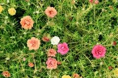 Flores coloridas con el fondo verde de la hoja foto de archivo libre de regalías