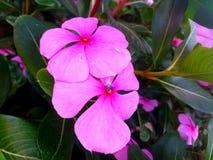 Flores coloridas con el primer fotos de archivo