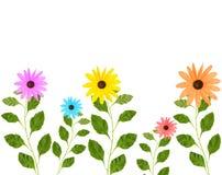 Flores coloridas con las hojas Fotos de archivo libres de regalías