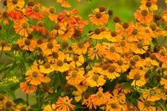 Flores coloridas da mola Fotos de Stock Royalty Free