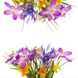 Flores coloridas da mola Imagens de Stock Royalty Free